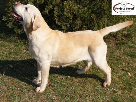 MERCY z Rancza Corrina Perfect Breed