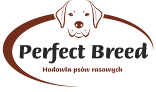 PERFECT BREED – Hodowla psów rasowych Labrador Retriever