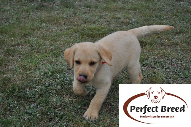 BEAUTIFUL GIRL Perfect Breed