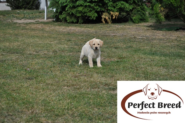 BELLA Perfect Breed