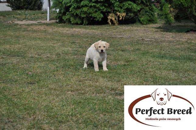 BELLA Perfect Breed