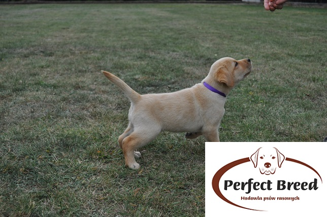 BEST OF THE BEST Perfect Breed