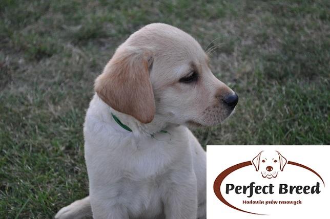 BONO Perfect Breed