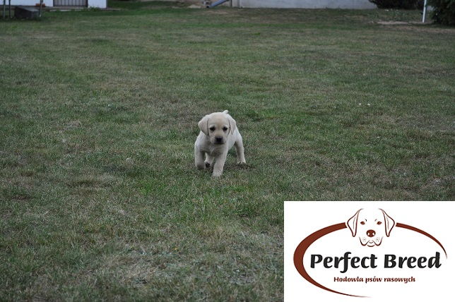 FIDUS Perfect Breed